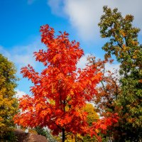 Осень на Красной. :: Андрей Печерский