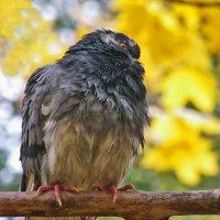 Что ты,голубь, загрустил,голову повесил? :: Наталья