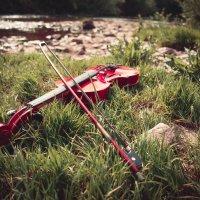 Скрипка :: Катя Шерабурко