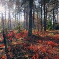 Заглянет солнце иногда вглубь октябрьского леса... :: Roman Lunin