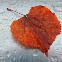 Лист осенний под дождем :: Павлова Татьяна Павлова