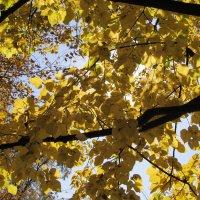 Смайлики на листьях :: Яна Чепик