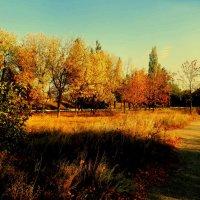 осень золотая.. :: неля  тулузова