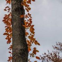 Ствол дерева с листьями :: Leha F
