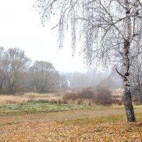 Серый-серый-серый день :: Николай Андреев