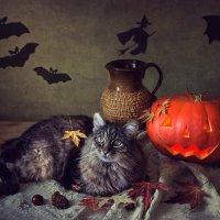 Хеллоуин с котом :: Ирина Приходько