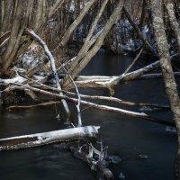 В ожидании зимы :: Валерий Чепкасов