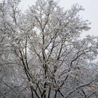 Дыхание зимы в октябре. :: шубнякова