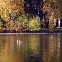 По аллеям парка :: ирина Пронина