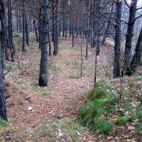 Лесные овраги . :: Мила Бовкун
