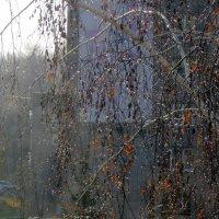 Капли дождя на деревьях... :: Мила Бовкун