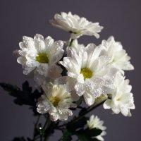 Цветы для настроения :: Александр Попов