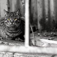 Уличный кот :: Daniel (Fichetto)