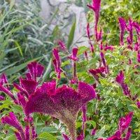 Южный цветок - кто знает какой? ))) :: Николай Ефремов