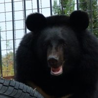 медведь :: elena manas
