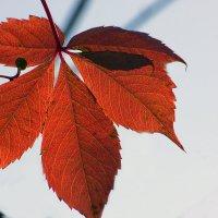 Осенний лист :: Сергей Добрыднев