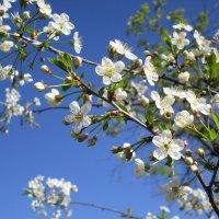 Вспомним весну ! :: Татьяна ❧