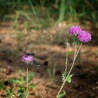 На лесном цветке. :: Андрий Майковский