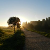 Рассветное солнце :: Анюта Румянцева