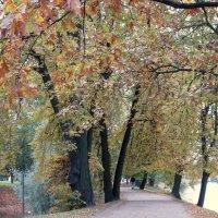 Осенняя зарисовка.... :: Валентина Жукова