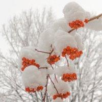 И падал снег ( красное-черное ) :: Микто (Mikto) Михаил Носков