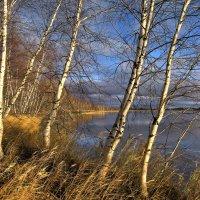 У озера. В осенний теплый день... :: Татьяна А