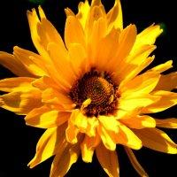 Цветок :: Артур Ходос