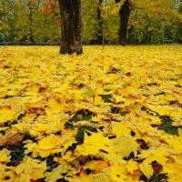 Ковер из листьев золотых ..... :: **Татьяна* *