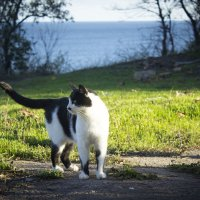 Одесский кот-обормот!!!! :: Татьяна Счастливая