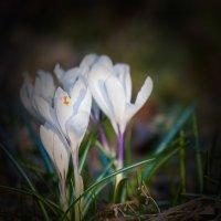 прекрасные творения природы :: Igor Epikhin
