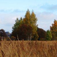 Поле, лес.. :: Антонина Гугаева
