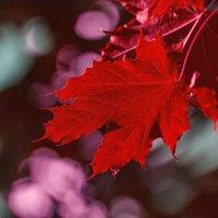 Про осень.... :: Марина Назарова