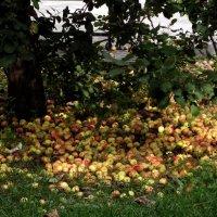Яблочко от яблони... :: Иля Григорьева