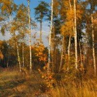 Золотая осень :: sergej-smv