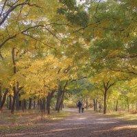 Осенняя прогулка :: Alis AN