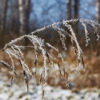Постучалась к нам зима :: Николай Мальцев