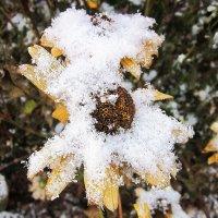 Была зима ( почти ). :: Мила Бовкун