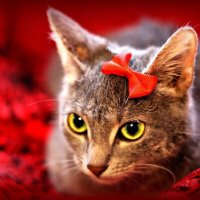 Любимые зверёныши. Котёнок Норка. :: TATYANA PODYMA