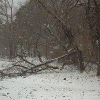 Первый снегопад сезона. :: Ольга