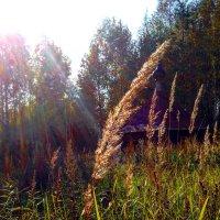 Травинка-былинка :: Мария Корнилова