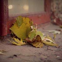 Осенняя мелодия :: Вера Шамраева