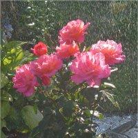 Летний дождь :: Эля Юрасова
