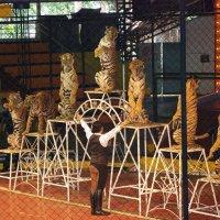 Тигры (Тайланд) :: Irina Schreiner