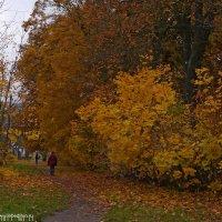 Осень :: Дмитрий Лебедихин