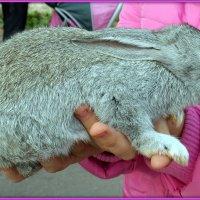 Кролик - это не только пушистый мех... :: Андрей Заломленков