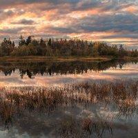 Вечер на болоте :: Александр