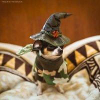 Джерри маленькая ведьма - готова к хеллоуину :: Сергей Кротов