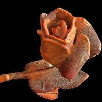 Окаменевшая роза :: Александр Панфилов