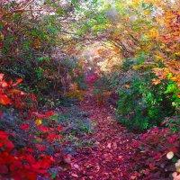 лесными тропами :: Андрей Козлов