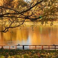 Осенний пруд :: НАТАЛИ natali-t8